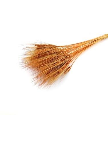 Kuru Çiçek Deposu Turuncu Doğal Başak Demeti Kuru Çiçek  Oranj